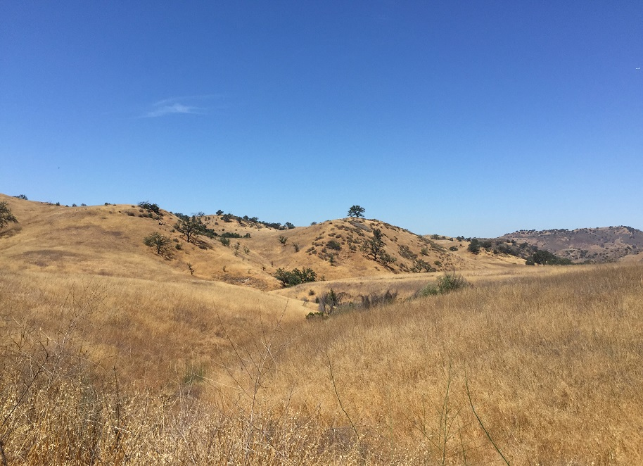 West Hills Loop Trail Summer