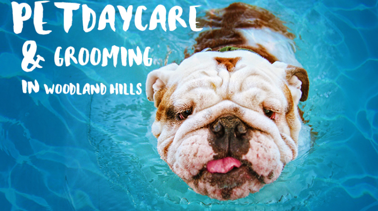 Where Pampered Pets Play…When Mom and Dad are Away: Premium Pet Daycare and Grooming Services in Woodland Hills