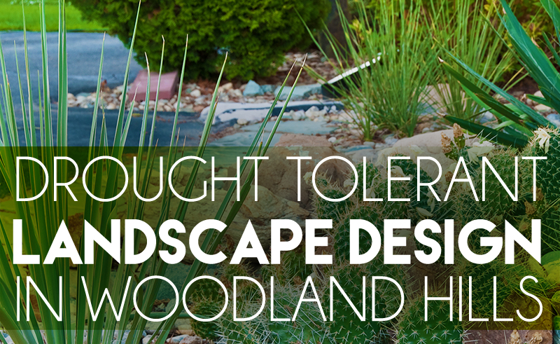 drought tolerant landscape design in woodland hills