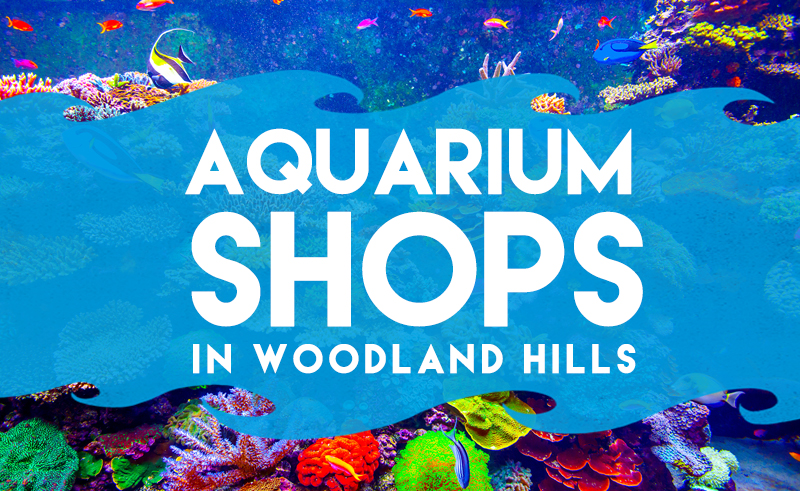 aquarium-shops-in-woodland-hills-cover copy