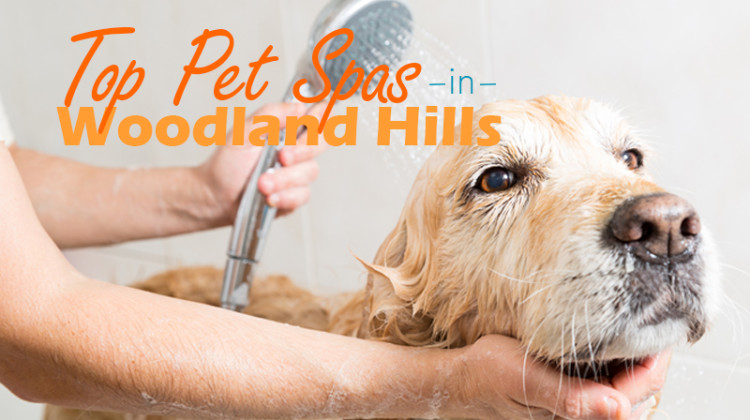 Your Furry Friend Needs Pampering Too: Top Woodland Hills Pet Spas