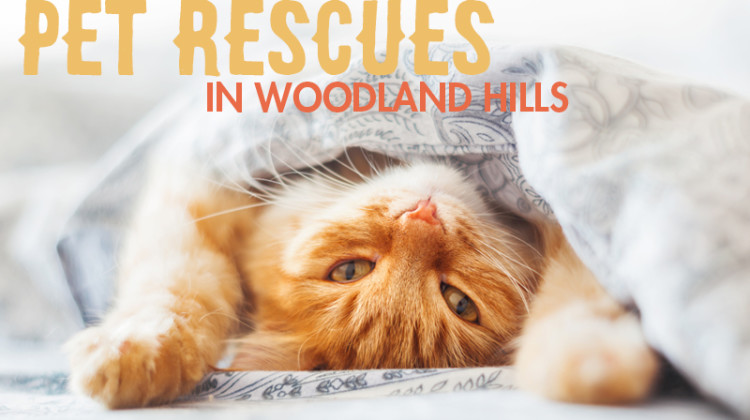 Purfect Pet Rescues in Woodland Hills