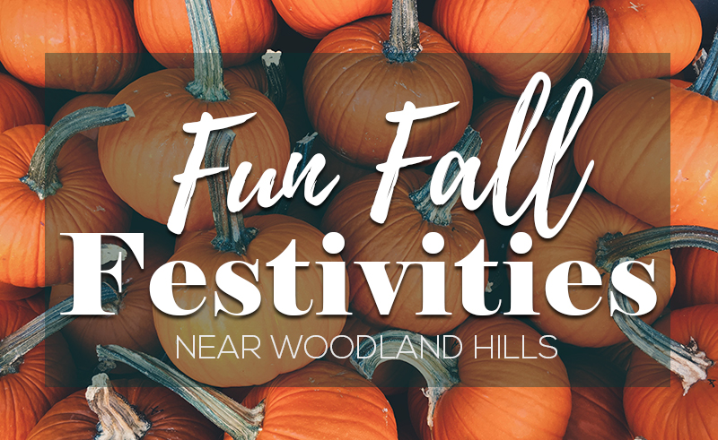 Fun Fall Festivities Article